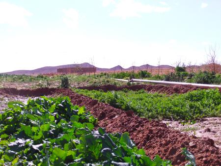 DG Acker Gemüse