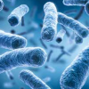 Infektionstheorie